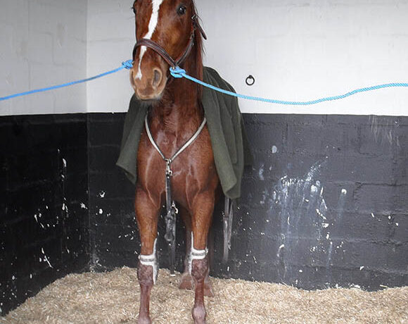 Litière Equine